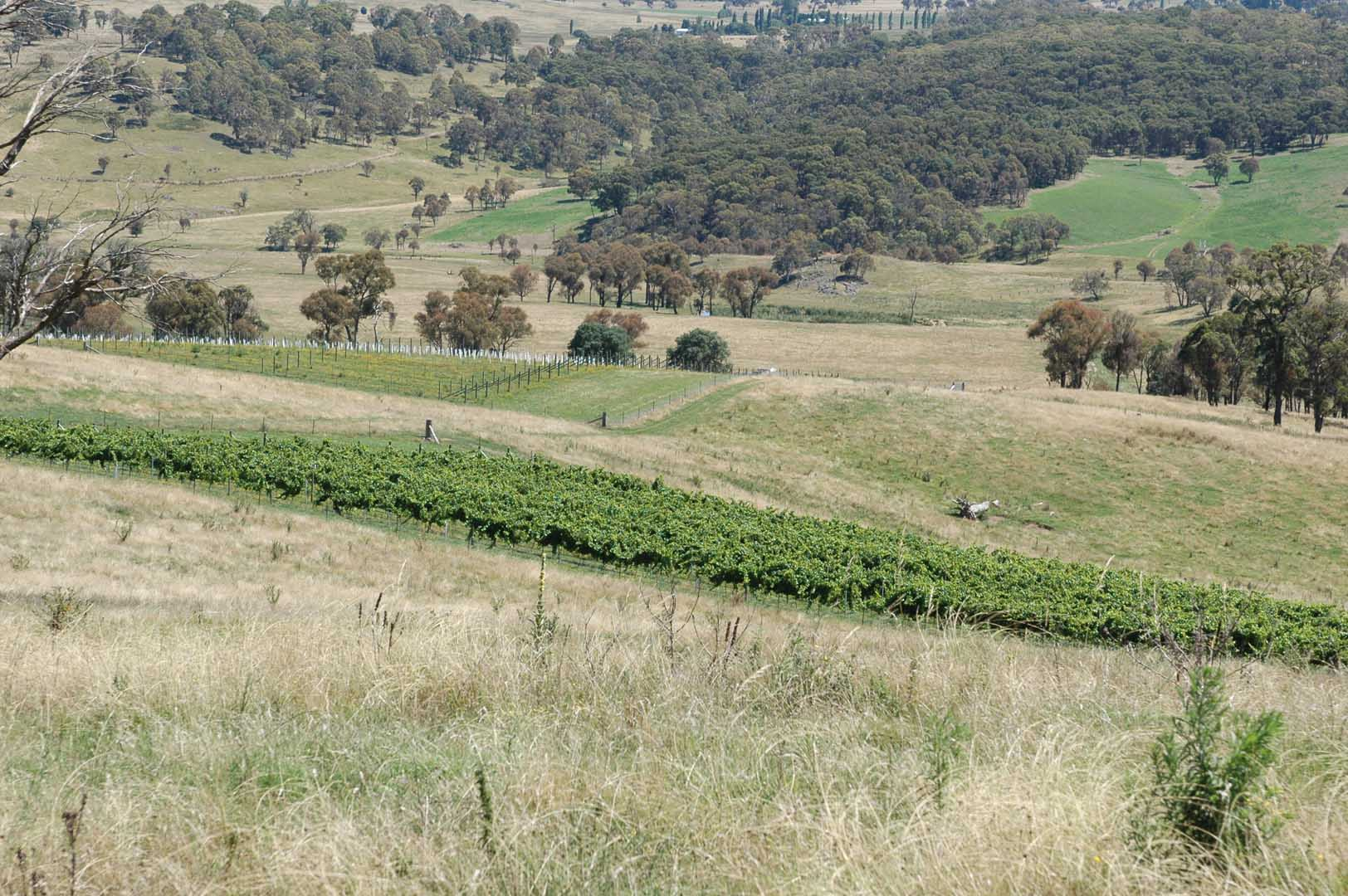 bridgewater_angus_vineyards